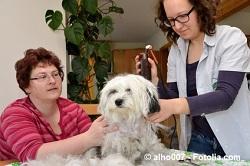 Hundeschermaschinen Test